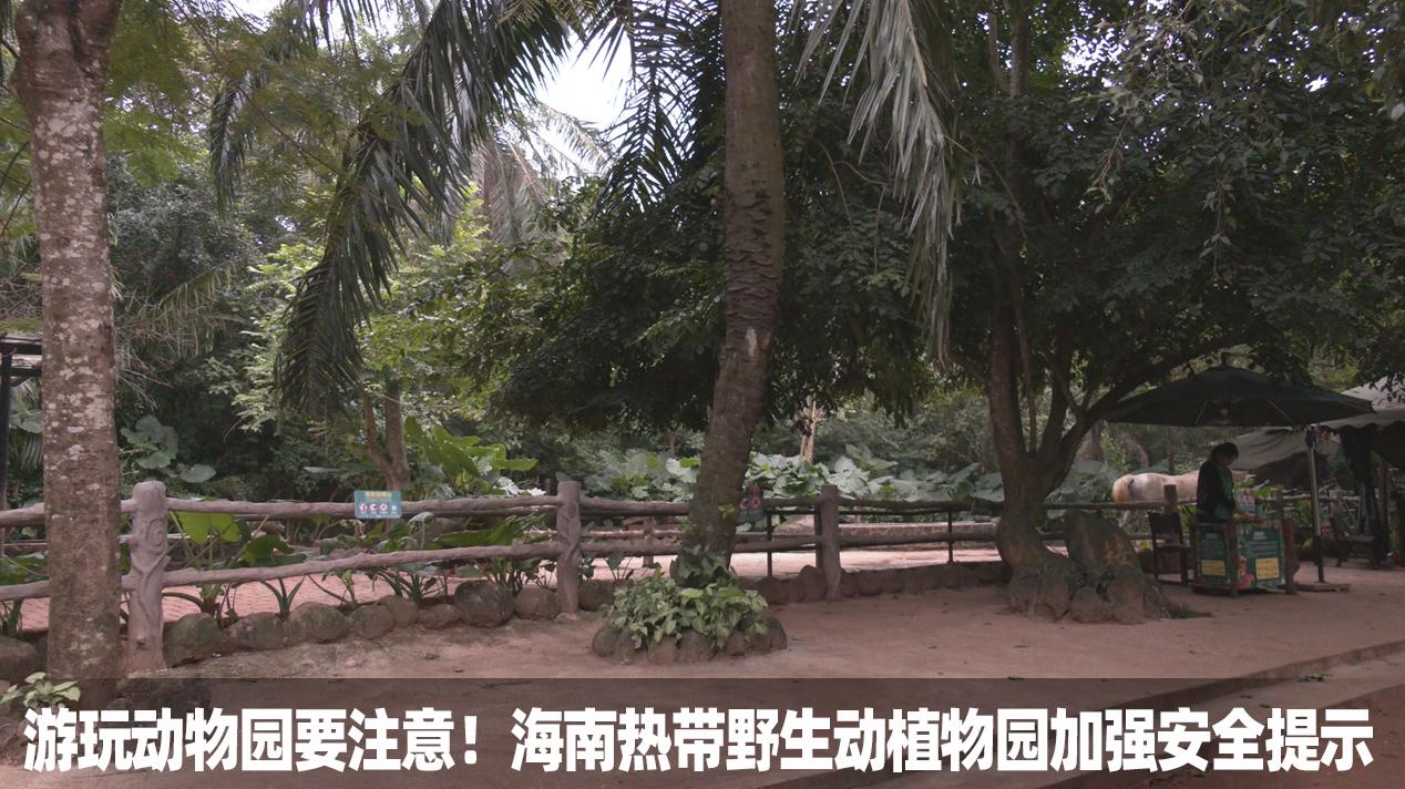 游玩动物园要注意!海南热带野生动植物园加强安全提示