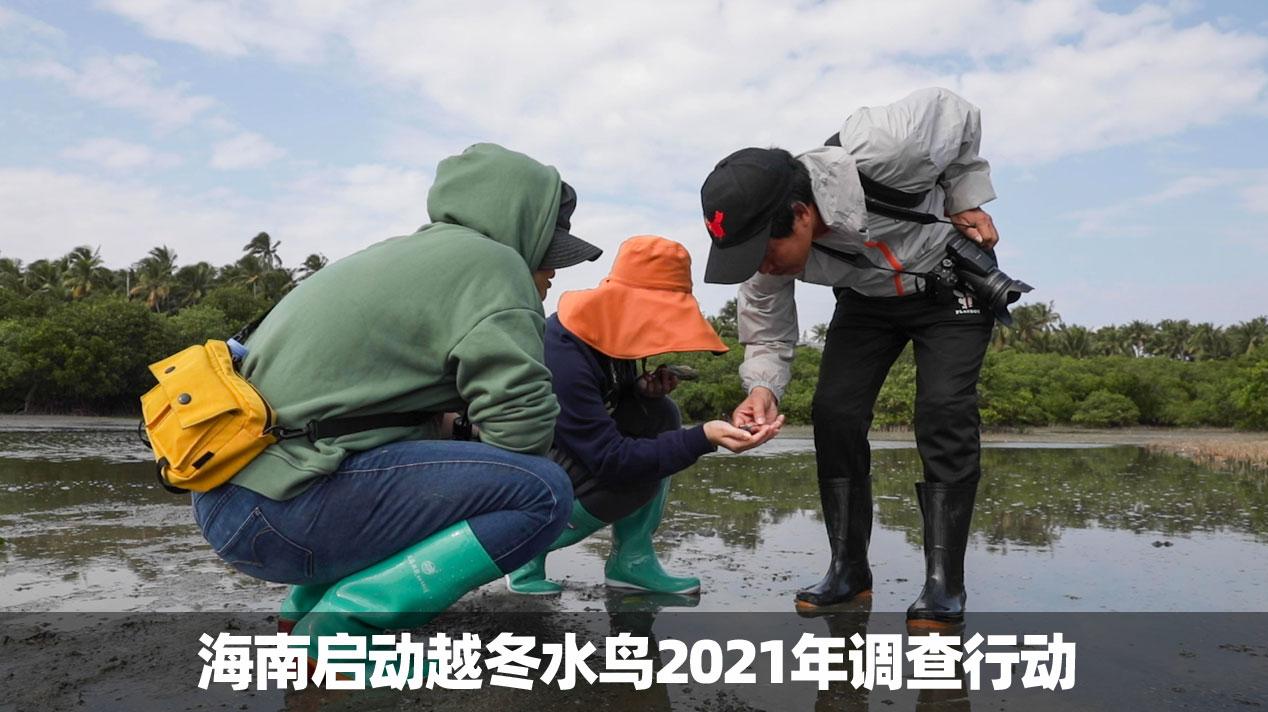 海南启动越冬水鸟2021年调查行动