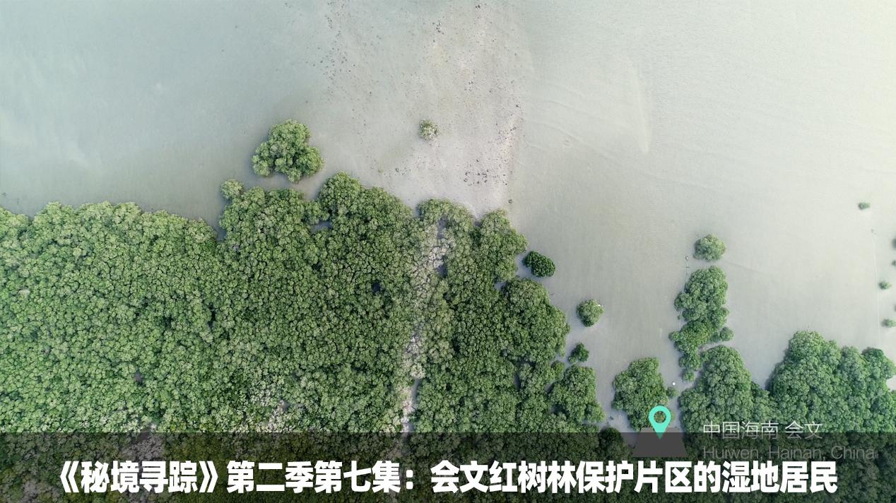 《秘境寻踪》第二季第七集:会文红树林保护片区的湿地居民