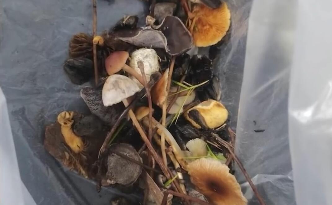 大妈采野蘑菇煲汤致一家四口中毒:有三人出现胰腺损伤
