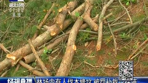 林场内有人伐木修坟 被罚补栽12棵苗